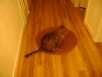 gros kida sur..;grrr le tapis!!!