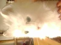 Moustache le chat interactif....