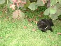 dans le jardin....
