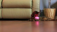 Cats+++GoSphero-com-SD