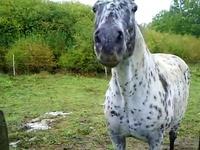 cheval qui dit OUI