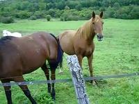 Maz aiment les chevaux