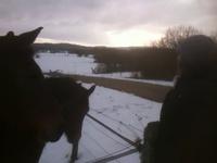 Les chevaux et Mazette