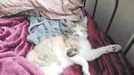 Fee's cat_14 04 18