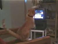 chat boxeur
