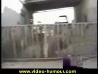 Video marrante bélier enervé - YouTube