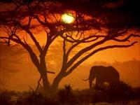 Rose Laurens   Africa - 1982 - YouTube